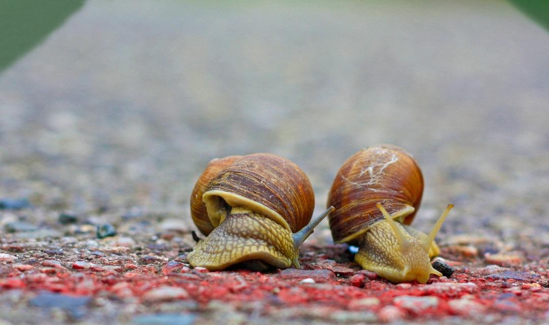 snails-1540696_1920